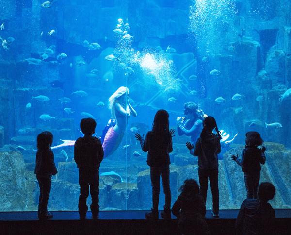 paris-com-criancas-aquarium