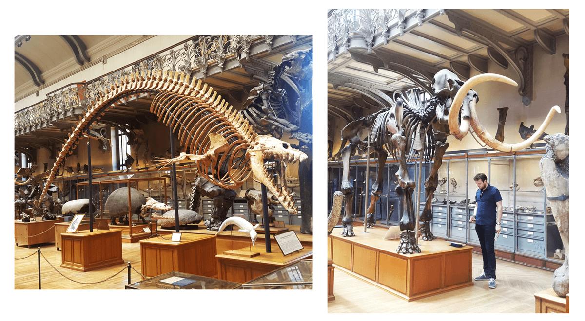 paris-com-criancas-museu-historia-natural