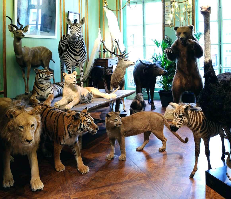 museus-de-paris-deyrolle